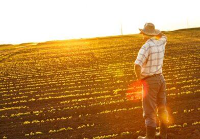 Agricultura viitorului: cum poți să îți faci ferma profitabilă prin tehnologie