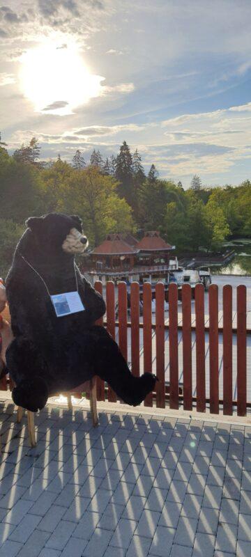 """""""Ursul"""" a revenit la Sovata"""