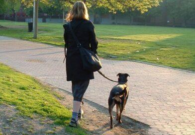In atenția proprietarilor de câini