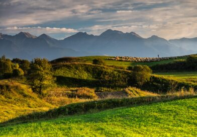 Colinele Transilvaniei, ultimul peisaj autentic medieval din Europa